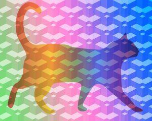 cat-1722396-960-720-db5b8422.jpg